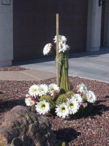 Cactus 2012