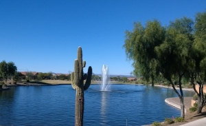 Cactus and Fountain